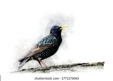 Watercolor Draw Style - Dark bird with a yellow beak on a white