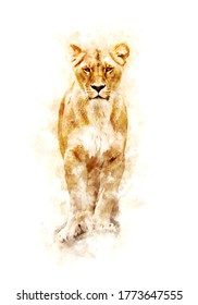 Watercolor Draw Style - Front view of a lonely lioness on a white