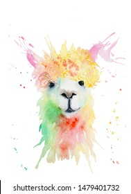 watercolor drawing of an animal - alpaca, drops, splashes. Sketch