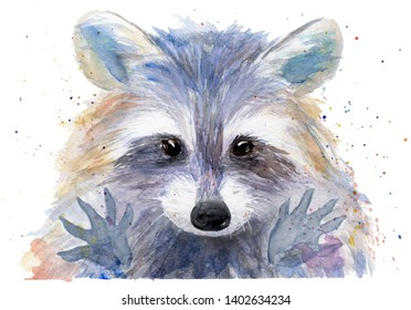 watercolor drawing of an animal - colored raccoon, sketch