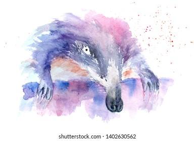 watercolor drawing of an animal - muskrat, shrew, sketch
