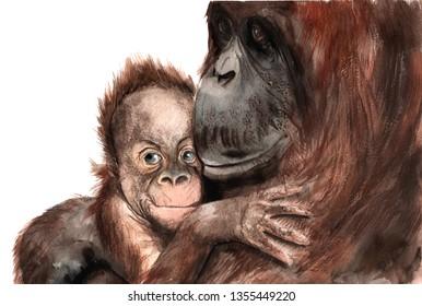 Orangutan Drawing Images, Stock Photos & Vectors | Shutterstock