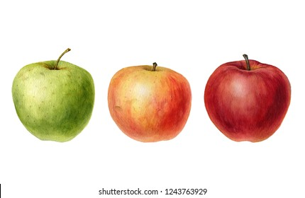 watercolor drawing apples isolated at white background, hand drawn botanical illustration