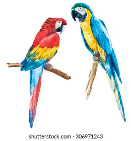 watercolor drawing of a bird isolated macaw