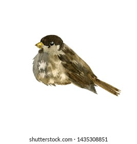 watercolor drawing bird sitting at tree branch, sketch of sparrow, hand drawn songbird, isolated nature design element