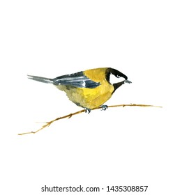 watercolor drawing bird sitting at tree branch, sketch of titmouse, hand drawn songbird, isolated nature design element
