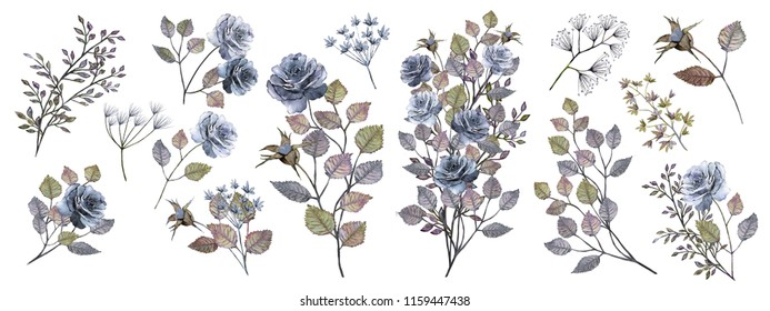 Watercolor drawing. Botanical illustration. Set: composition of blue roses, colorful leaves, bouquets of different colors,decorative herbs, twigs, leaves, buds.