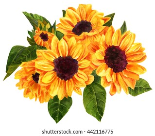 A watercolor drawing of a bouquet of vibrant golden yellow sunflowers, hand painted on white background in the style of vintage botanical art