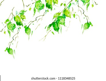 Watercolor drawing, a branch of a birch, an apple-tree, a cherry, a poplar with leaves. Green leaves in the wind. An abstract splash of paint. On white isolated background. Watercolor logo, card.
