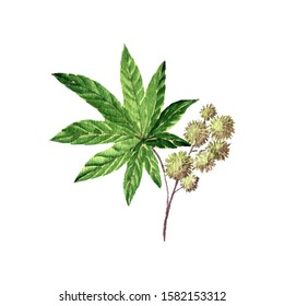 watercolor drawing castor plant, ricinus plant ,hand drawn illustration