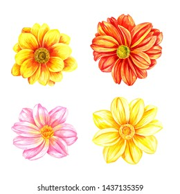 watercolor drawing dahlia flowers isolated at white background, hand drawn illustration