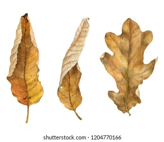 watercolor drawing dry autumn leaves of trees, botanical illustration, hand drawn floral element