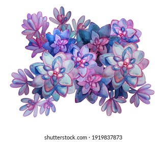 watercolor drawing exotic plant of Echeveria.  image of tropical flowers rainbow color. succulent botanical illustration  drawing for card, flyer, clipart, design, wallpaper.  bright colorful plant