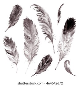 Watercolor drawing feather collection. Isolated images. For decoration, cards, invitations, textile, t-shirts