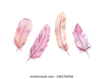 Watercolor drawing feather's set. Isolated images on white background. For decoration, cards, invitations, textile, t-shirts
