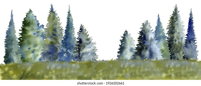 watercolor drawing fir trees silhouettesat white background, coniferous forest, hand drawn illustration