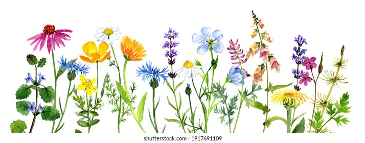 watercolor drawing floral background, natural template with medicinal plants, hand drawn illustration