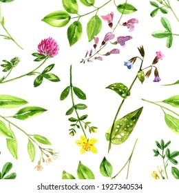 watercolor drawing floral background, natural template with wild plants and flowers, hand drawn illustration