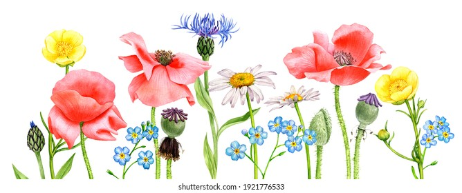 watercolor drawing flowers , floral background, hand drawn illustration