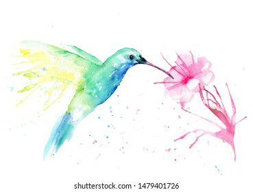watercolor drawing of a hummingbird bird with a flower. colibri