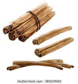 watercolor drawing isolated spice cinnamon stick, cinnamon bunch