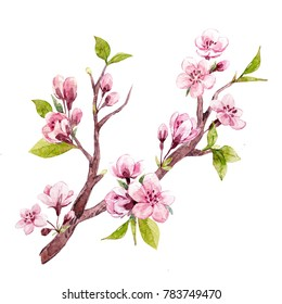 Watercolor drawing isolated tree branches with Sakura flowers, cherry blossoms and young green leaves, set isolated objects