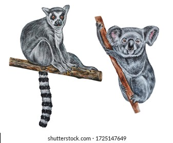 Watercolor drawing of koalas and madagascar lemur on a white background for packaging, wallpapers, prints, t-shirts, textiles, posters, cards and much more.