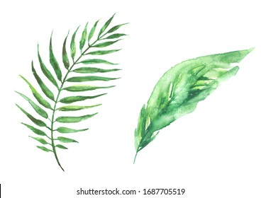 Watercolor drawing of a leaf of a palm tree. Green tropical palm leaf. Hand drawn illustration. Drawing on white isolated background, logo, element.  Tropical set of watercolor elements