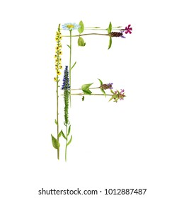 watercolor drawing letter F from wild plants and flowers, floral typeface element, hand drawn nature background