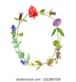 watercolor drawing letter O from wild plants and flowers, floral typeface element, hand drawn nature background
