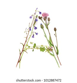 watercolor drawing letter A from wild plants and flowers, floral typeface element, hand drawn nature background