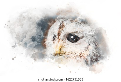 Watercolor drawing of the owl's head in profile with big eyes in brown tones on a light sheet of paper