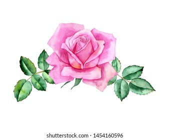 watercolor drawing pink flower and leaves of rose, isolated floral composition, hand drawn botanical illustration