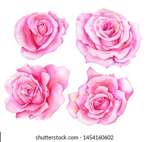 watercolor drawing pink flowers of roses, isolated floral composition, hand drawn botanical elements