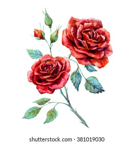 watercolor drawing of red rose isolated on white background