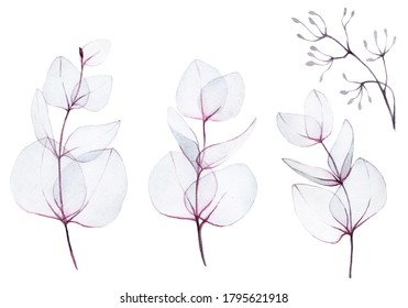 watercolor drawing. set, collection of abstract transparent eucalyptus leaves. transparent sprigs of pink eucalyptus plant isolated on white background. delicate design for wedding and decoration