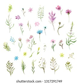 watercolor drawing: a set of wild grasses and flowers