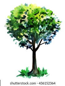 A watercolor drawing of a summer green tree, hand drawn on white background