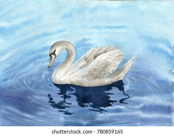 watercolor drawing swan swimming in blue water