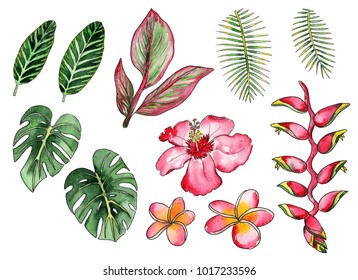 Watercolor drawing of tropical plants and flowers