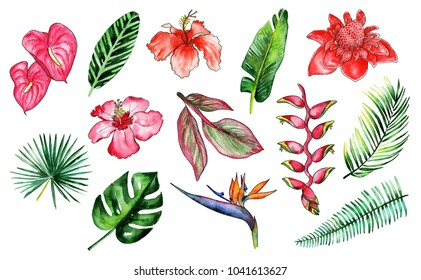Watercolor drawing of tropical set. Palm leaf and flowers illustration