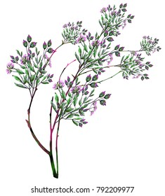 watercolor drawing of twig with leaves and flowers. Botanical illustration.