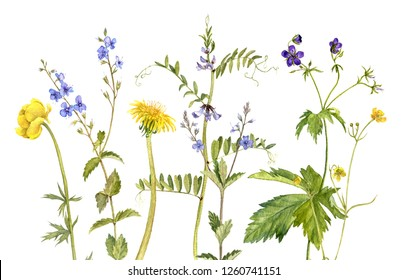 watercolor drawing wild flowers and plants, painted botanical illustration, hand drawn natural background