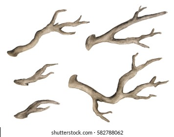 Watercolor dry tree branches, bare twigs, boughs set isolated on white background