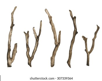 Watercolor dry tree branches, twigs set closeup isolated on white background. Hand painting on paper