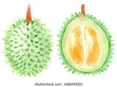 Watercolor durian fruit. Hand drawn summer illustration. Design for fabric, packaging, textile, cover, postcard, paper, scrapbooking, wrapping, clothes, stickers, cards, posters, logo