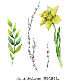 Watercolor Easter set with pussy-willow, herbs and daffodil. May be used for spring textile decoration print, invitation card decor or wrapping paper or napkin design. Hand drawn floral illustration