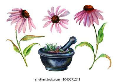 Watercolor echinacea and mortar with pestle.