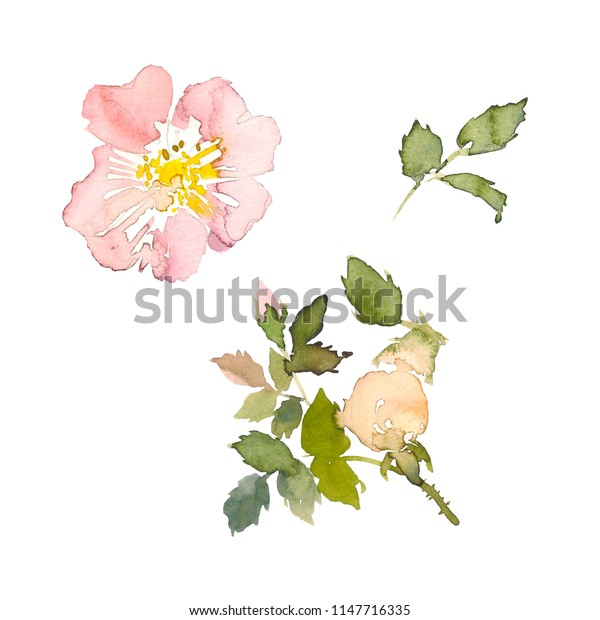 Watercolor element of pink roses and green leaves on the white background. Watercolor romantic garden flowers sketch. Card template with message Summer.
