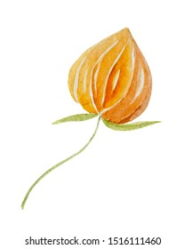 watercolor elements of the Chinese culture. A cape gooseberry illustration on a white background.